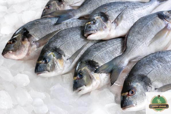 مشروع محل سمك